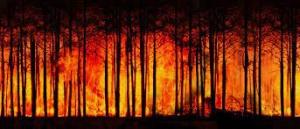 Debate ForestWISE – CoLAB para a Gestão Integrada da Floresta e do Fogo